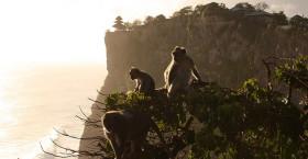 Pura Luhur Uluwatu Monkey Temple