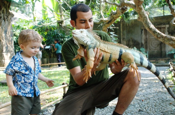 Bali Reptile Park Bali Reptile Park Komodo Dragon